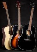 Dove Acousic Guitar DD-110C
